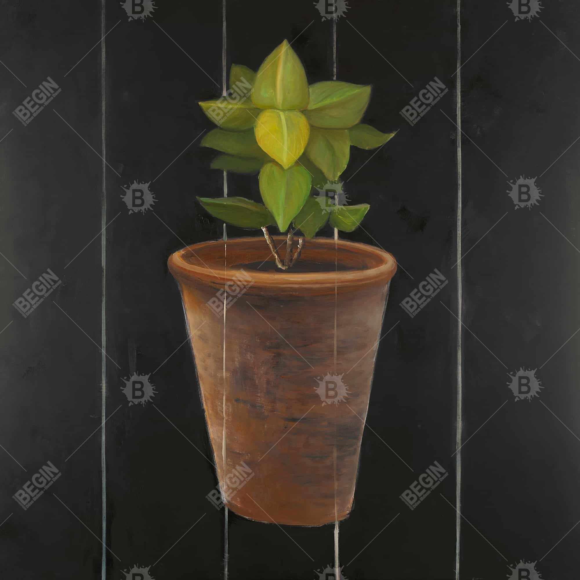 Plant of bay leaves