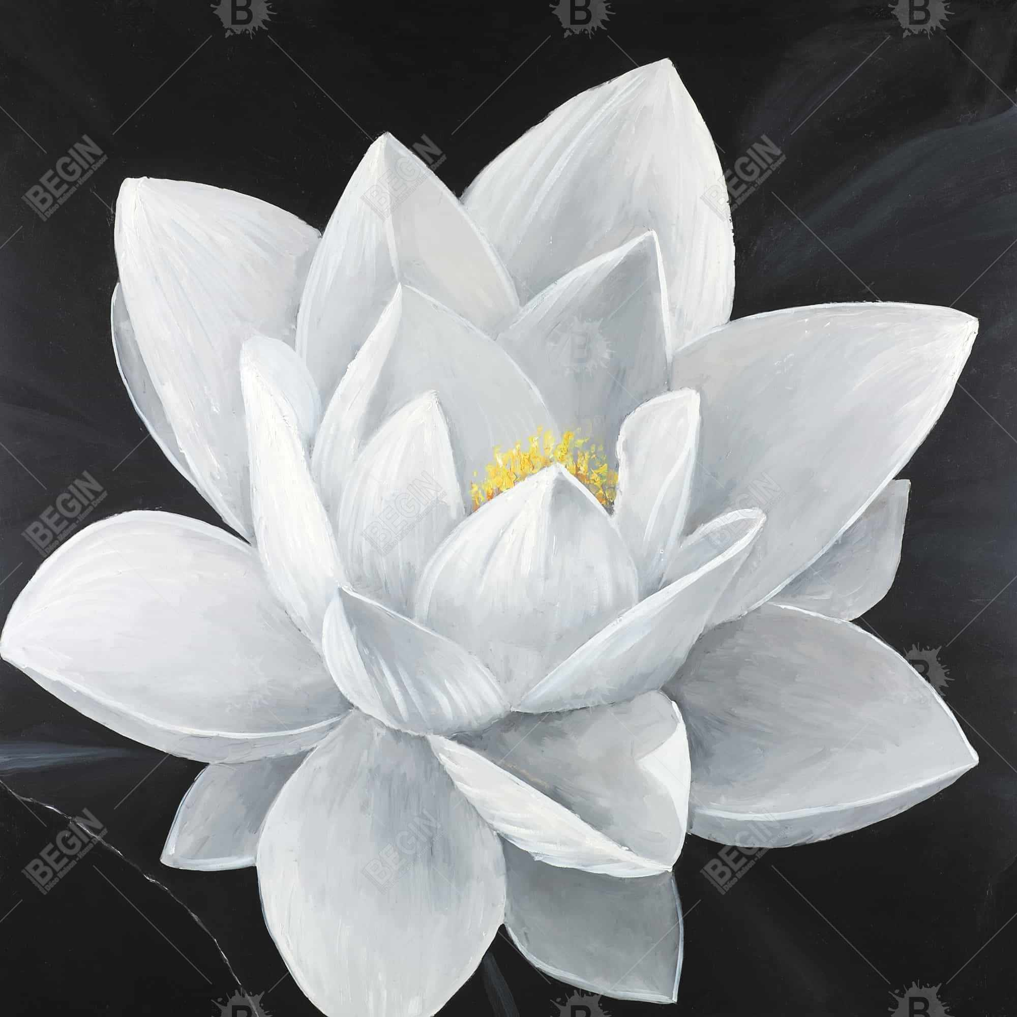 Overhead view of a lotus flower