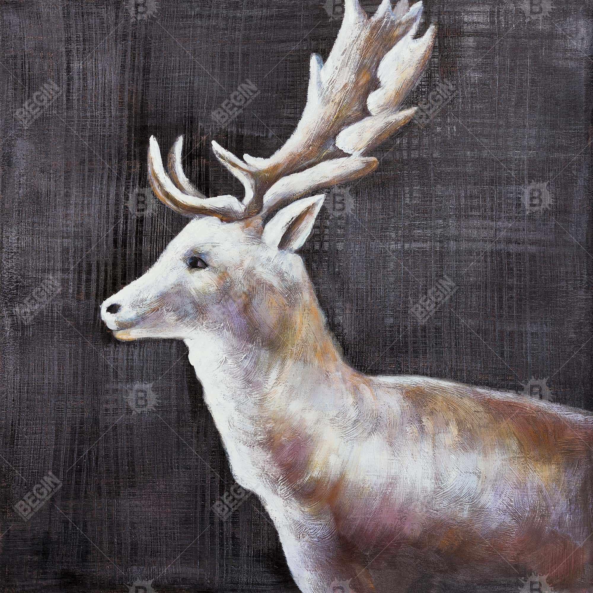 Deer profile view in the dark