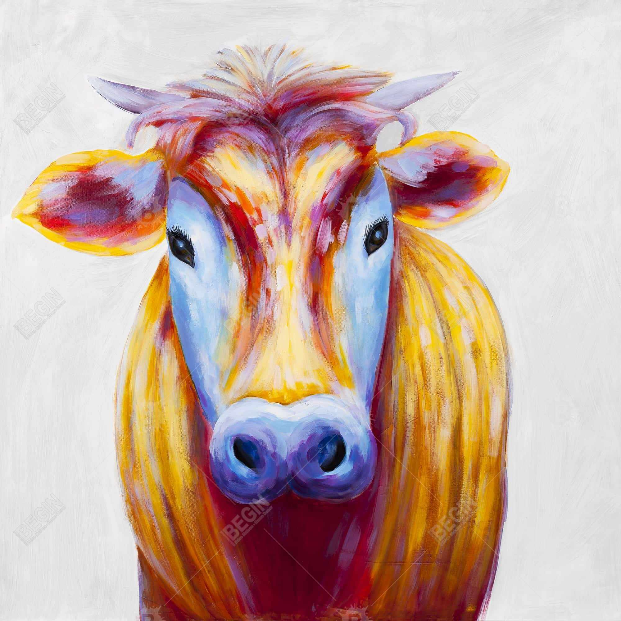 Colorful country cow