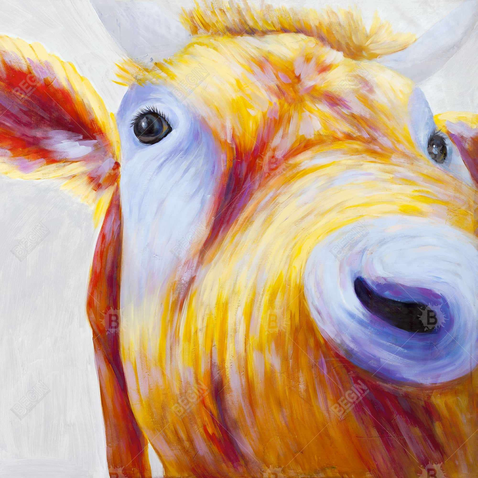 Closeup of a colorful country cow