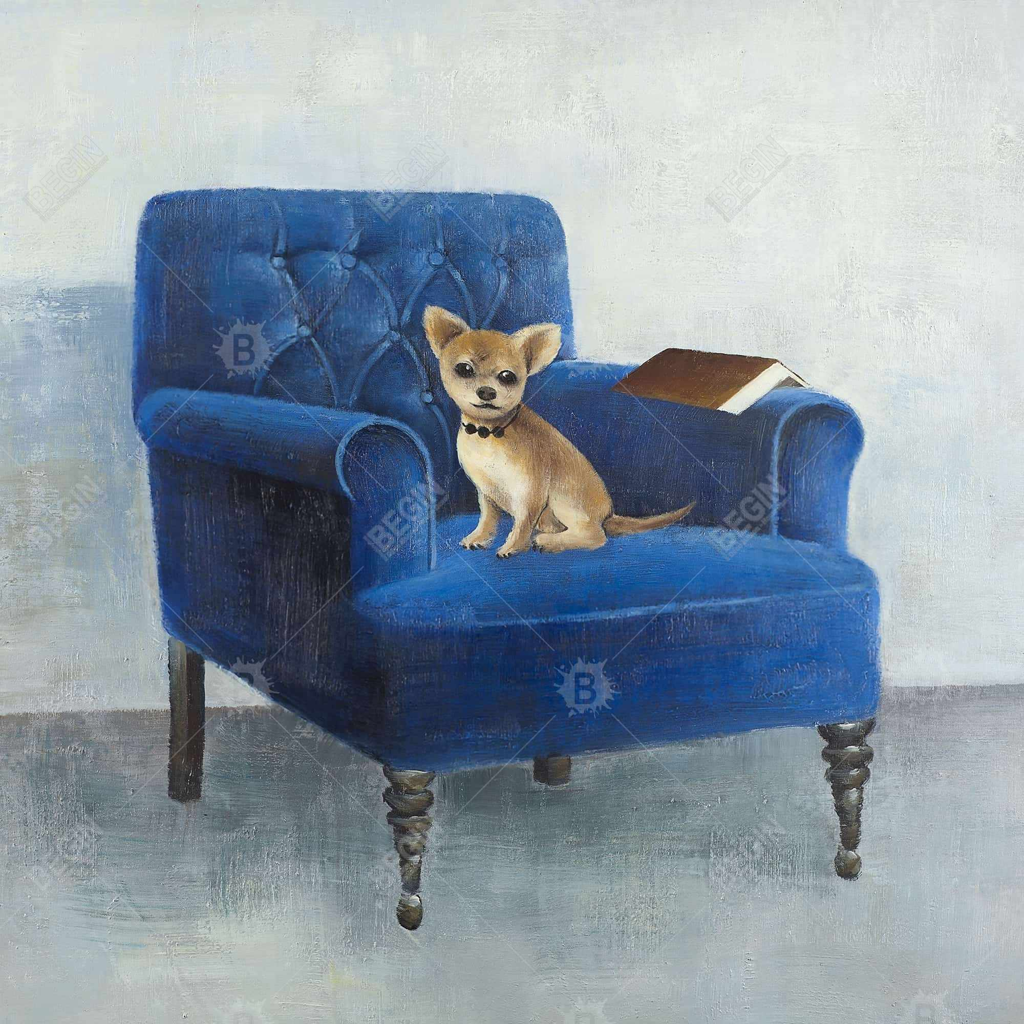 Chihuahua on a blue armchair