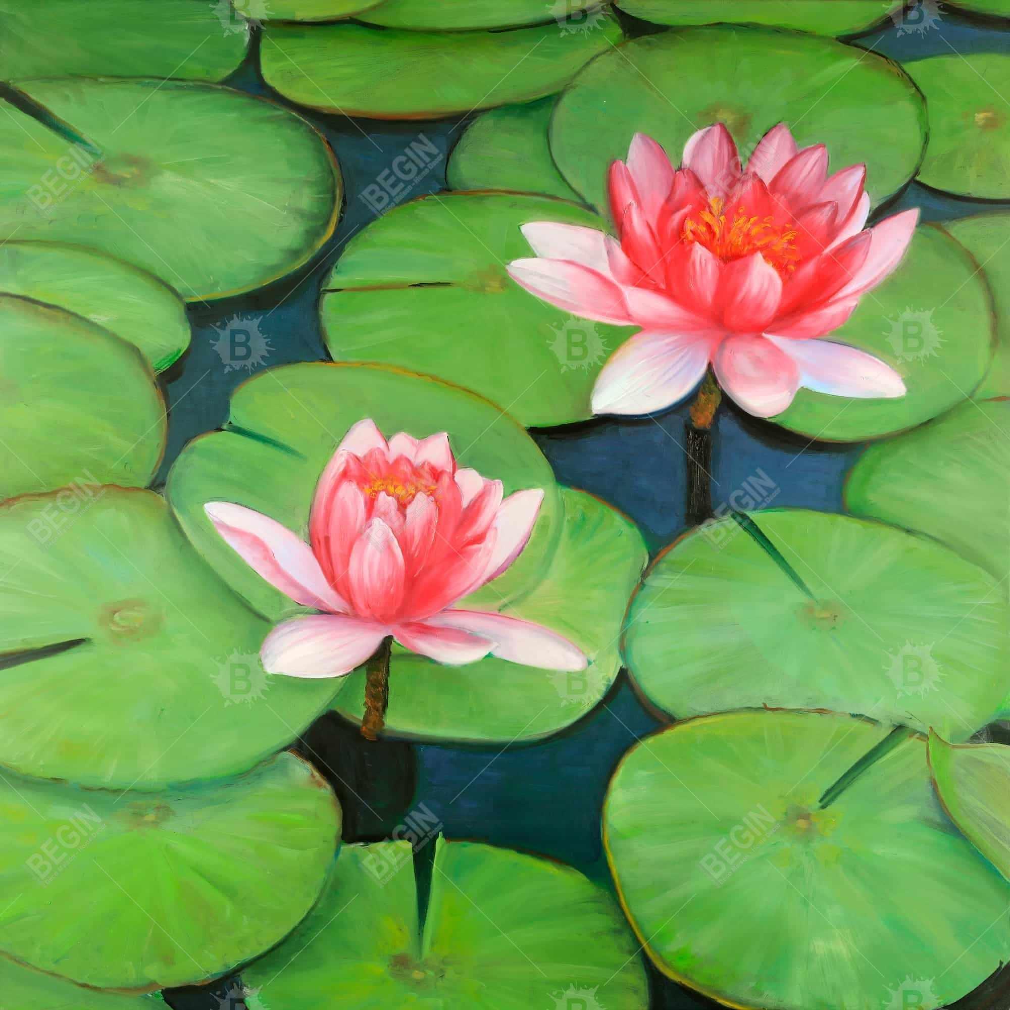 Lotus flowers in a swamp
