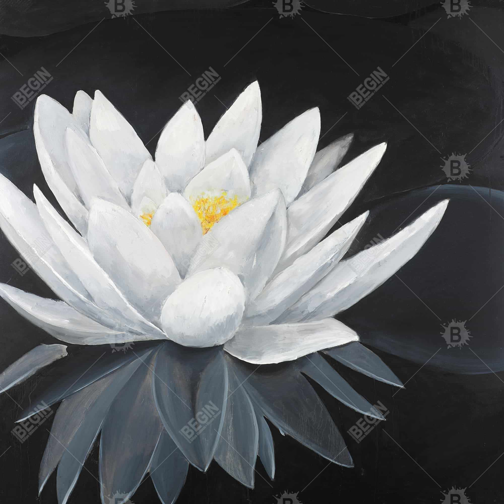 Lotus flower with reflection