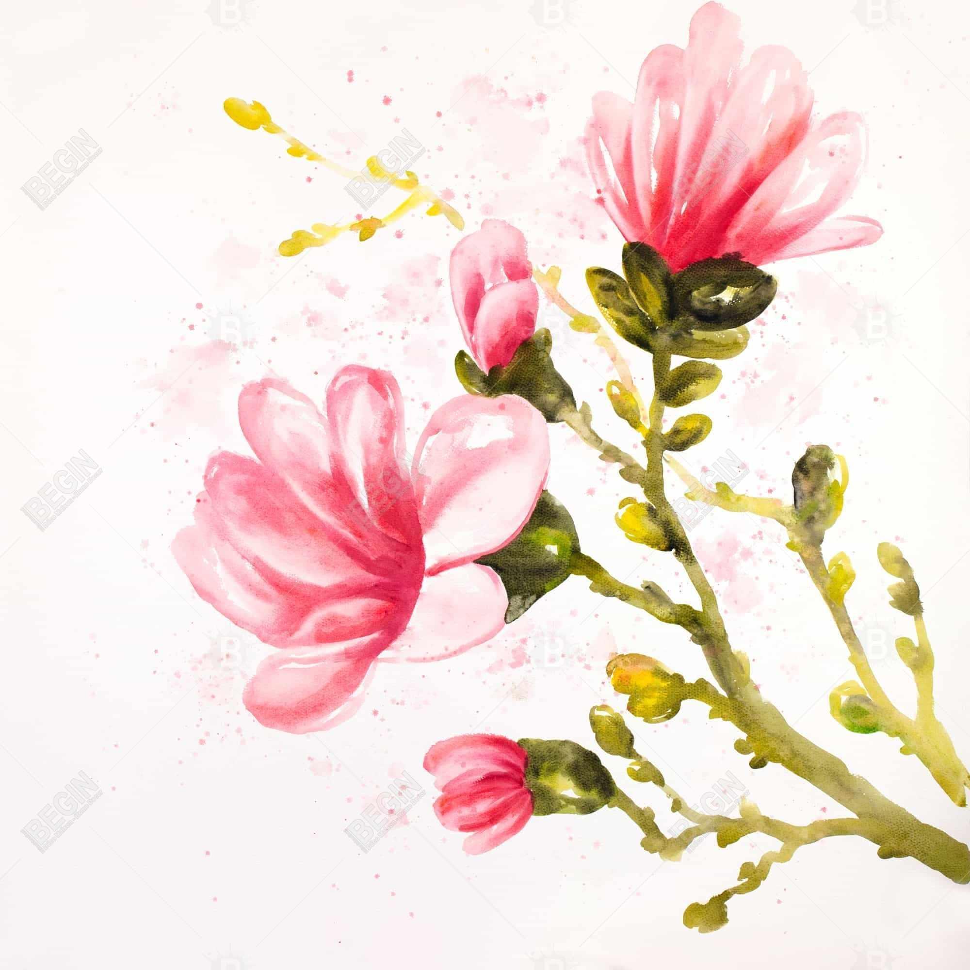 Watercolor magnolia flowers