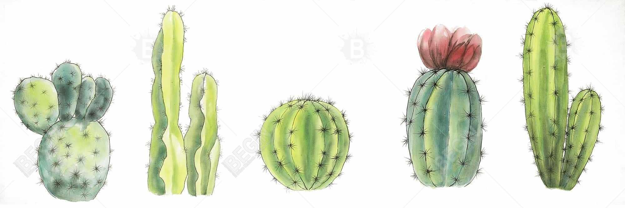 Tiny cactus set
