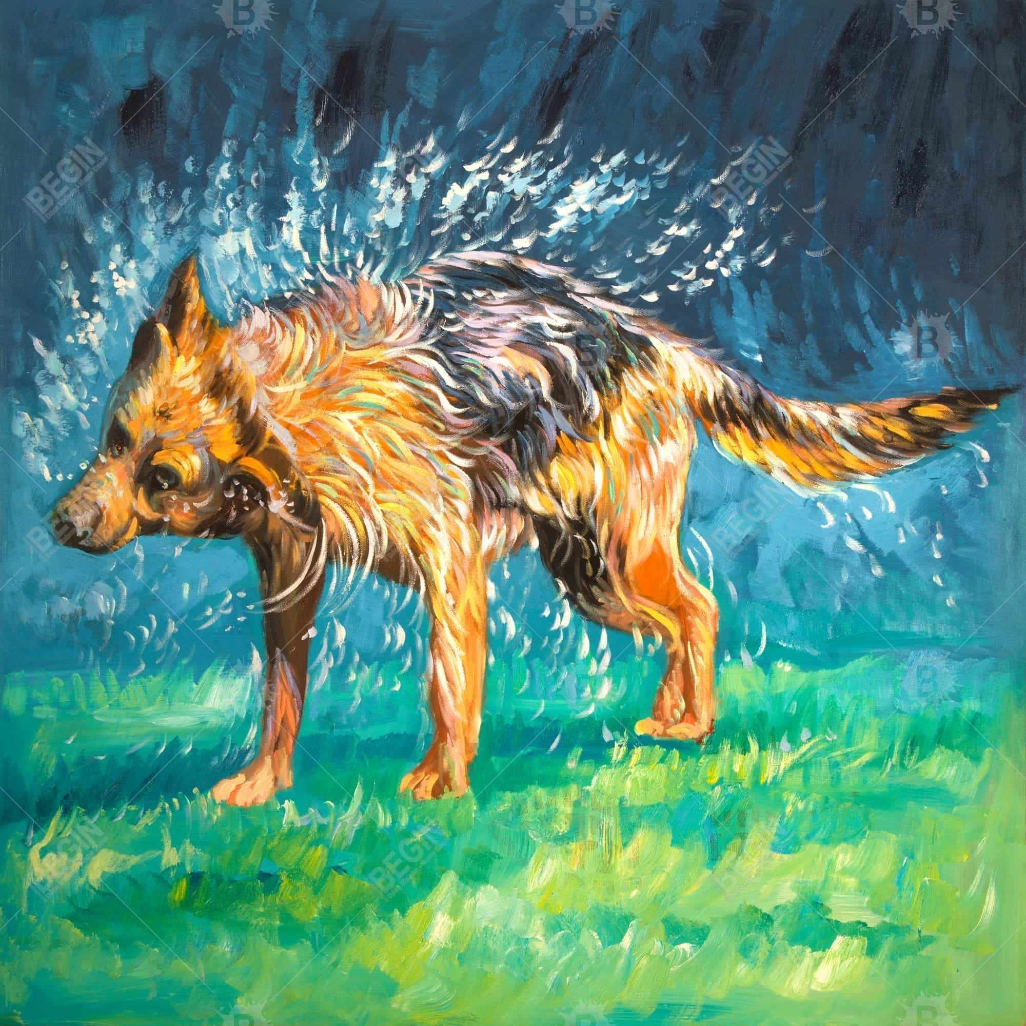 Spin-dry wet german shepherd
