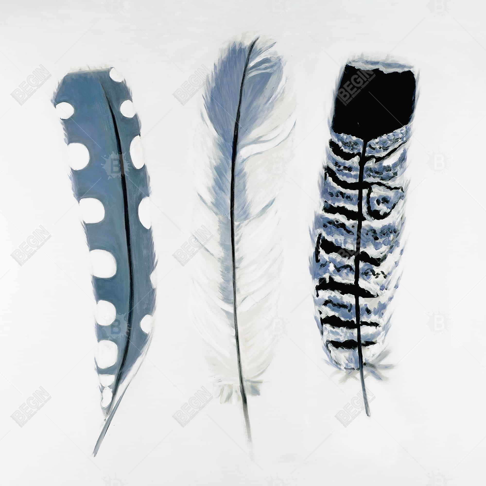 Delicate blue feathers