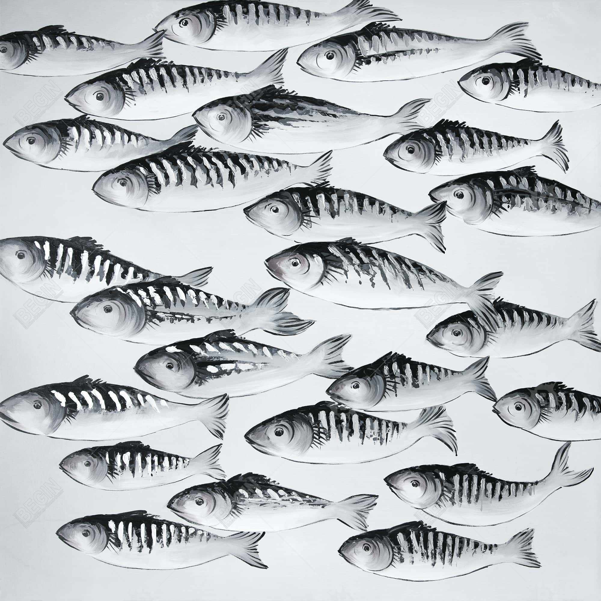 Gray school of fish