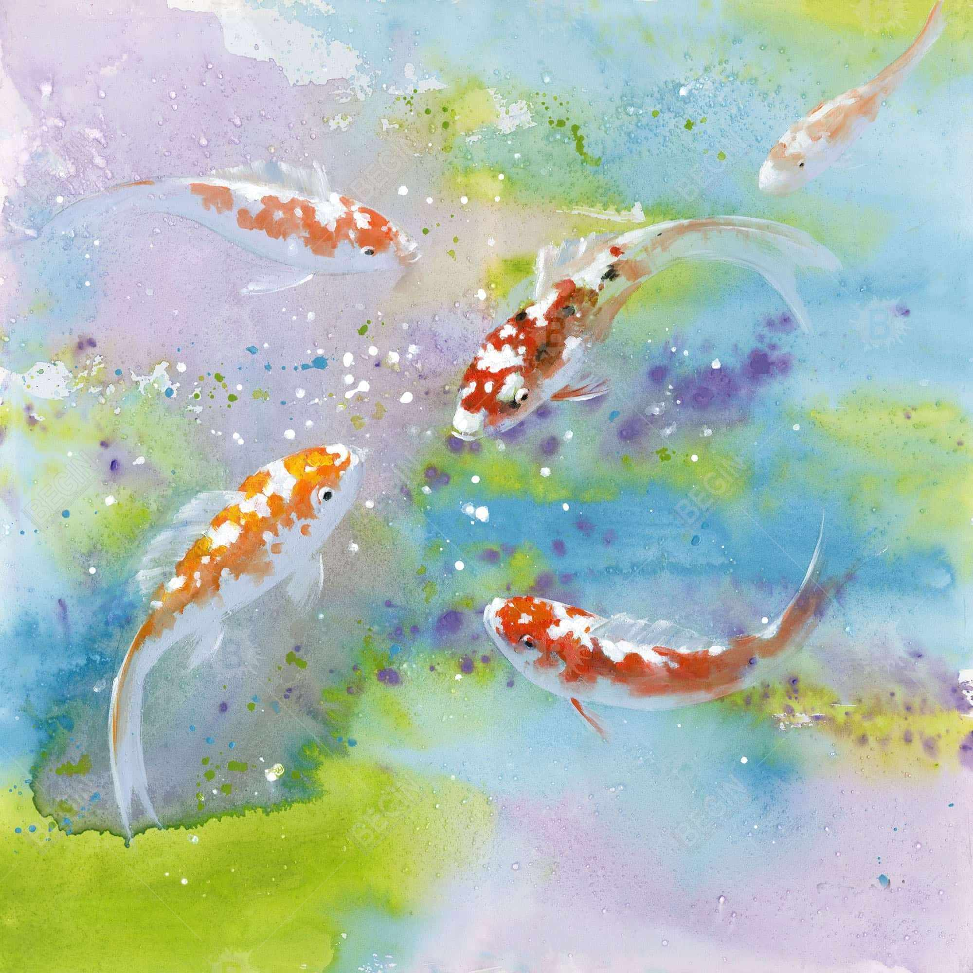 Four koi fish swimming
