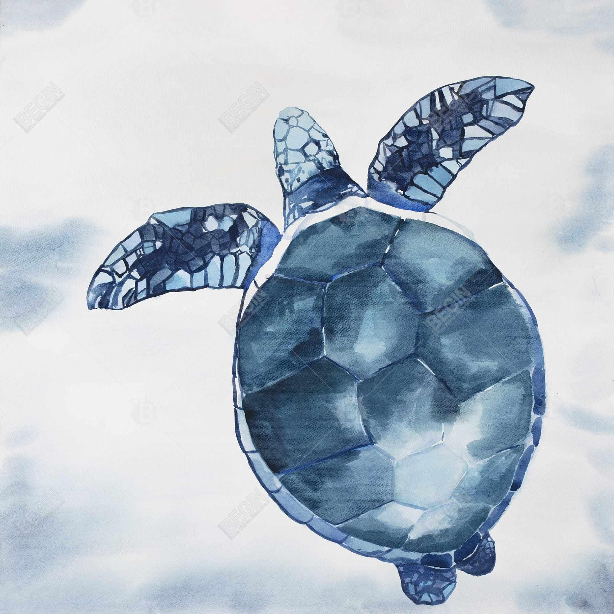 Watercolor blue turtle