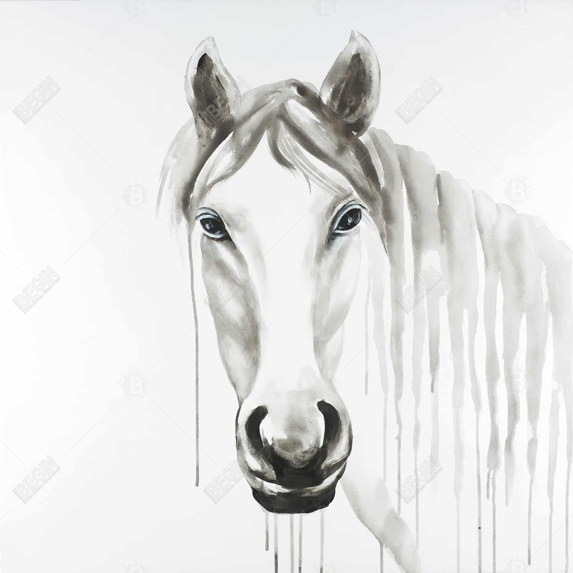 Solitary white horse