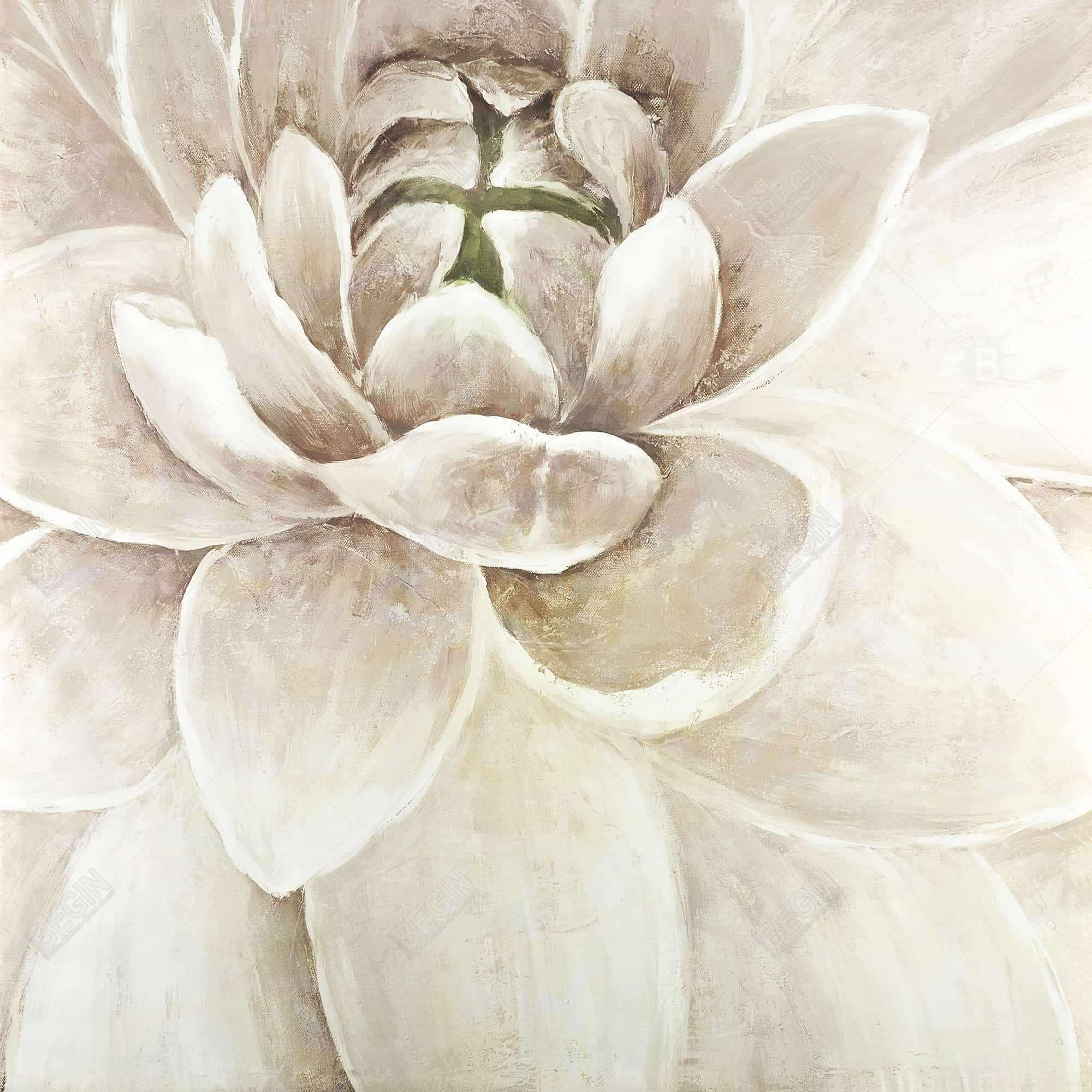 Delicate chrysanthemum