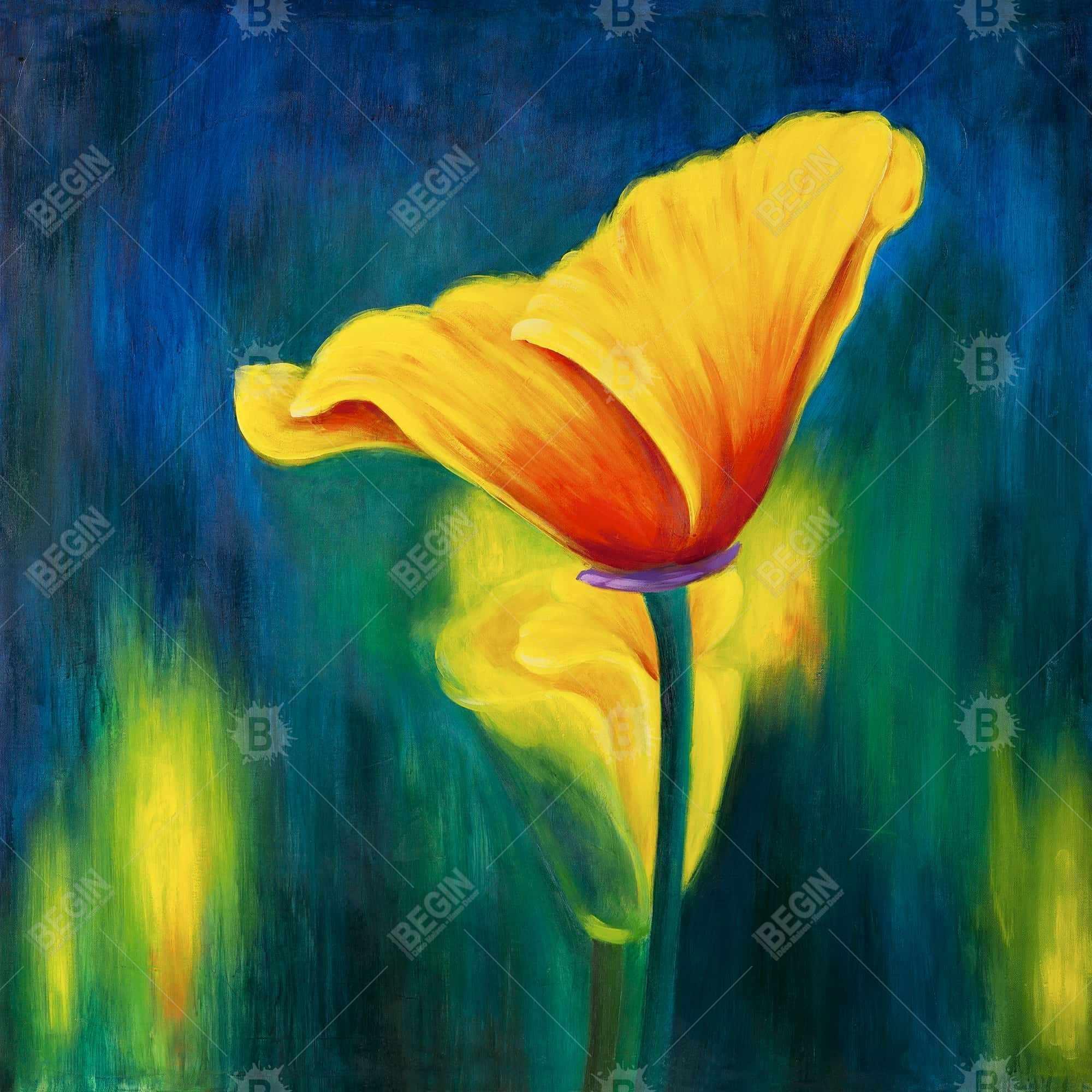 Superb contrast flowers