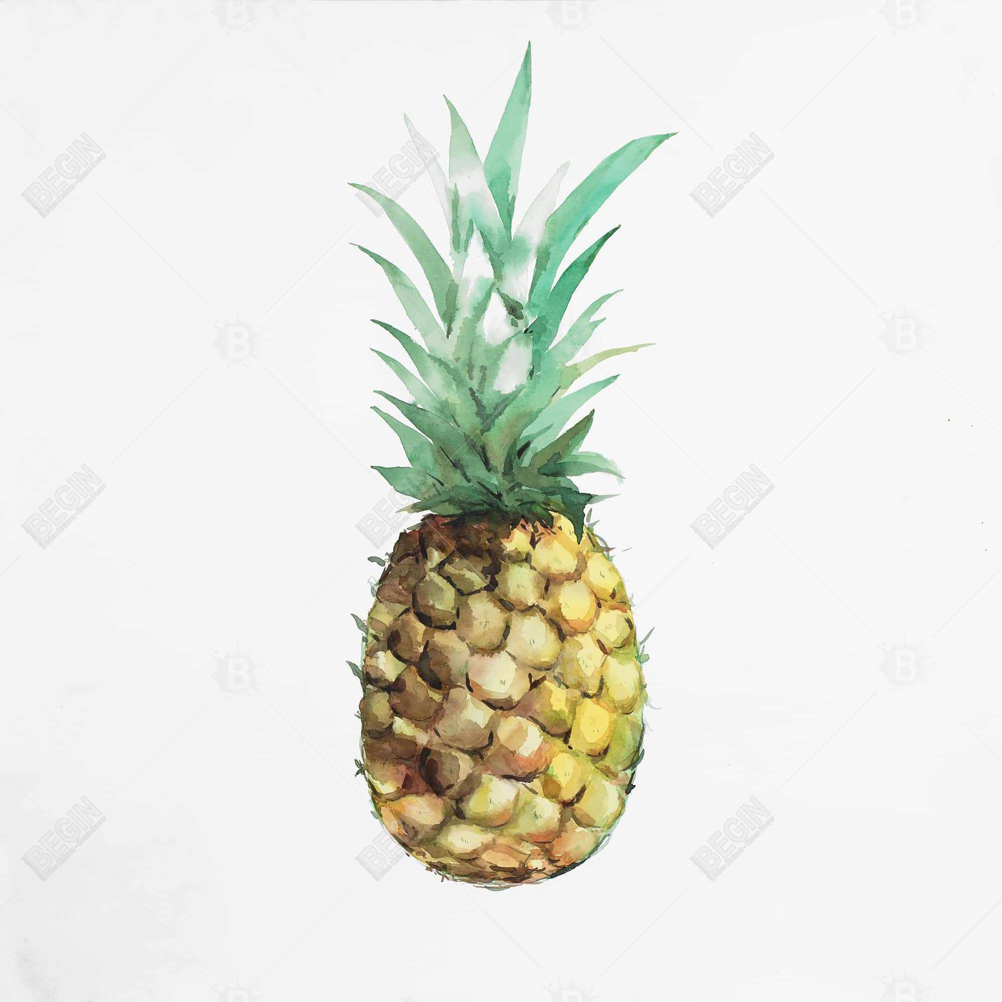 Ananas à l'aquarelle