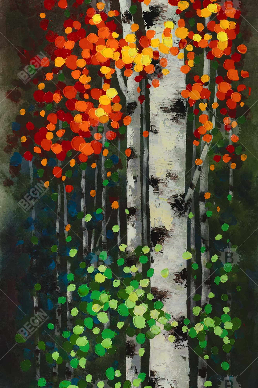 Bicolored leaf birch 1