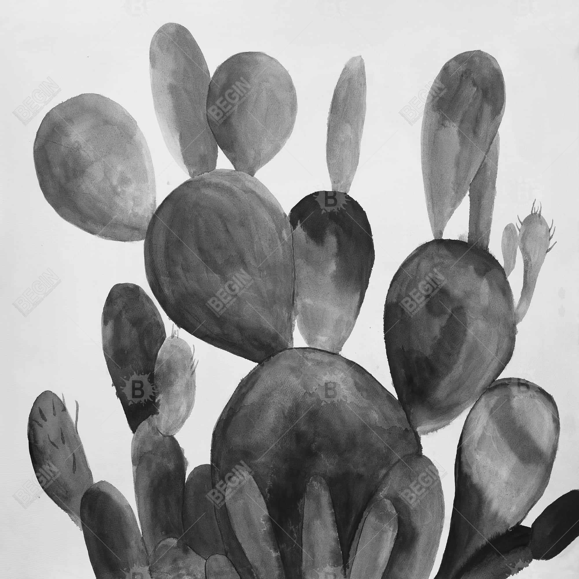 Grayscale paddle cactus plant