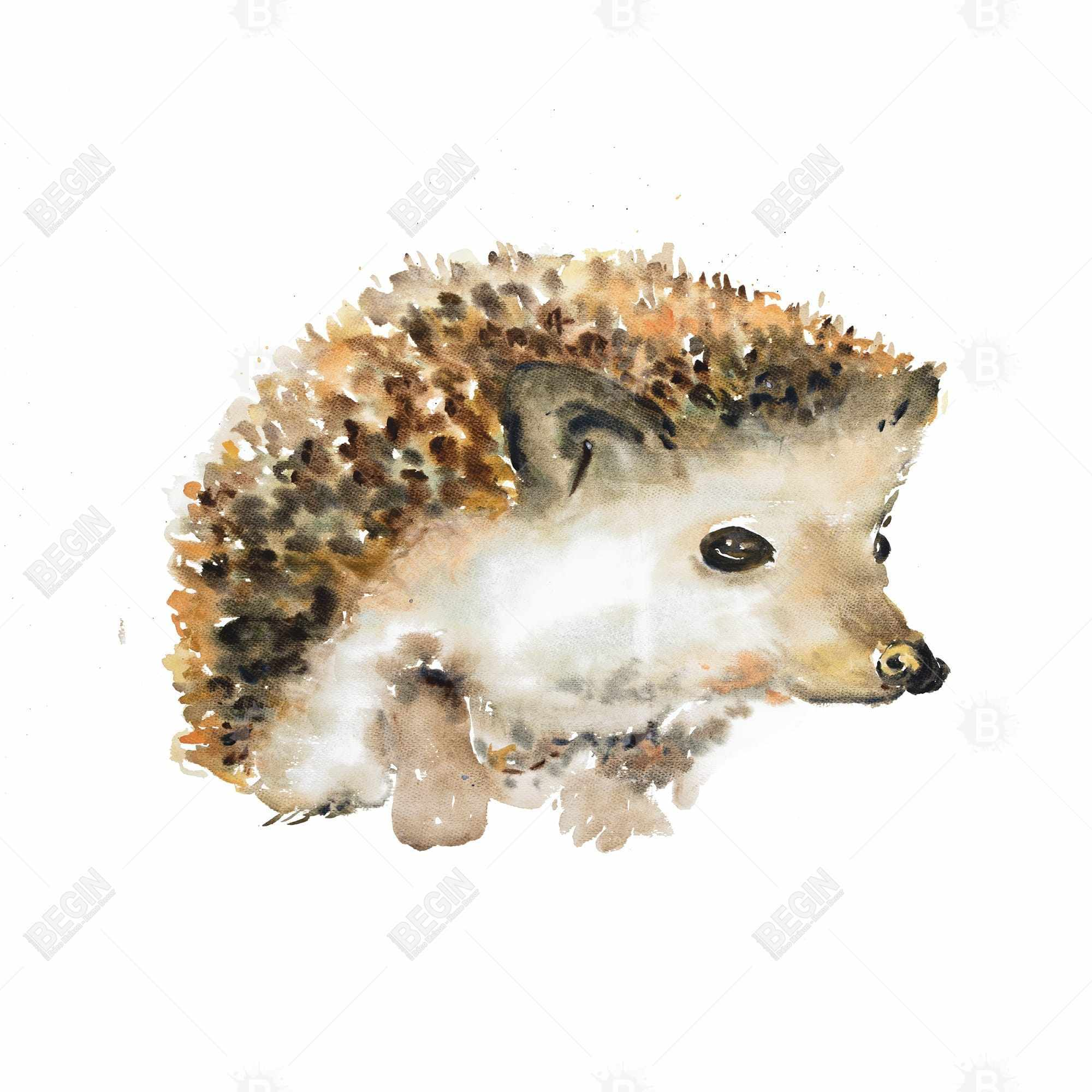 Watercolor hedgehog