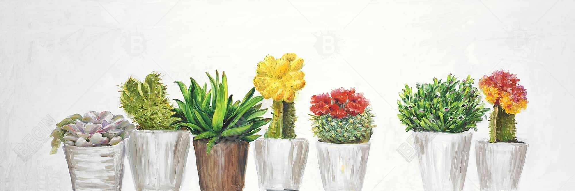 Small cactus and succulents