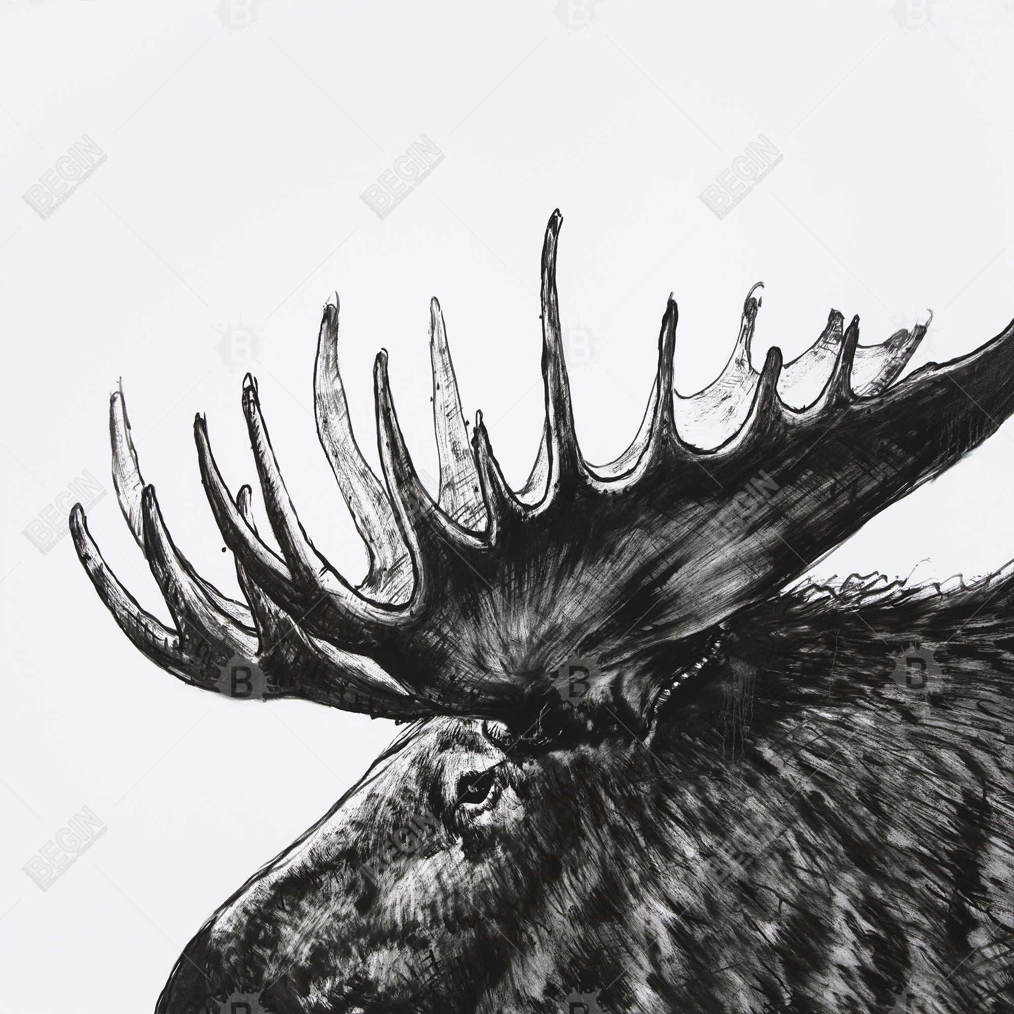 Moose plume