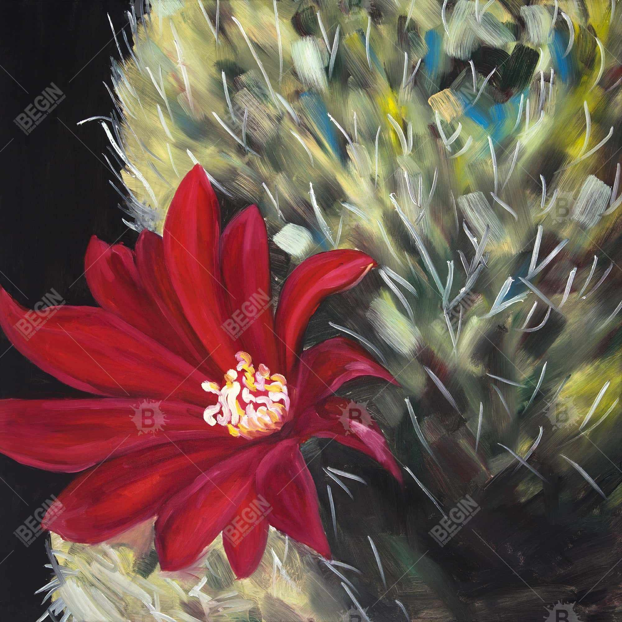 Echinopsis red cactus flower