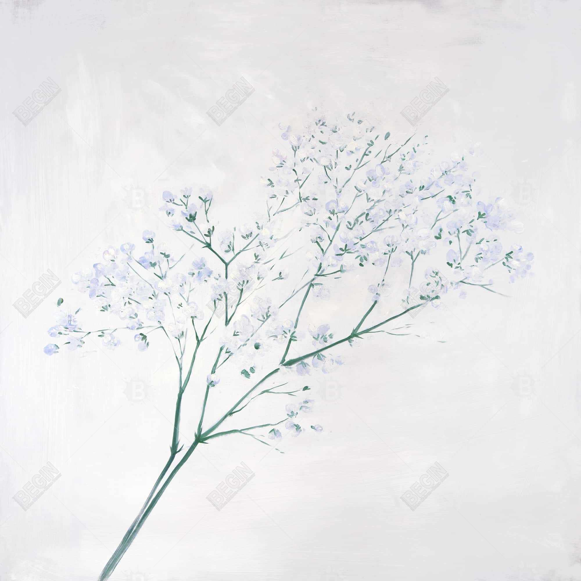 Bouquet of flowers baby's breath