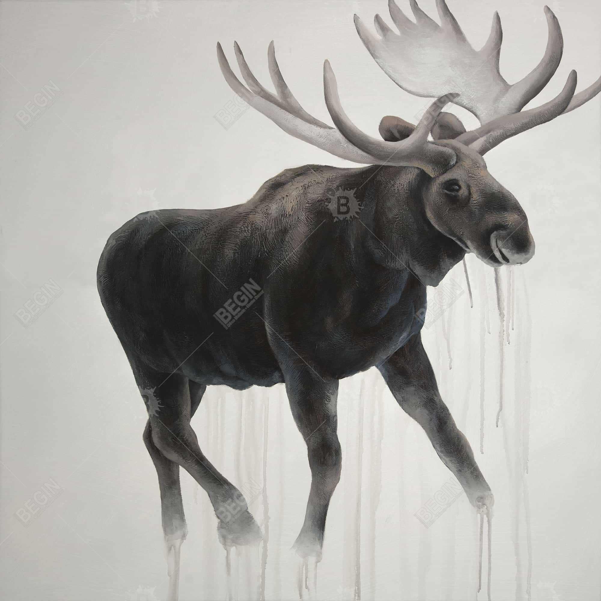 Walking moose