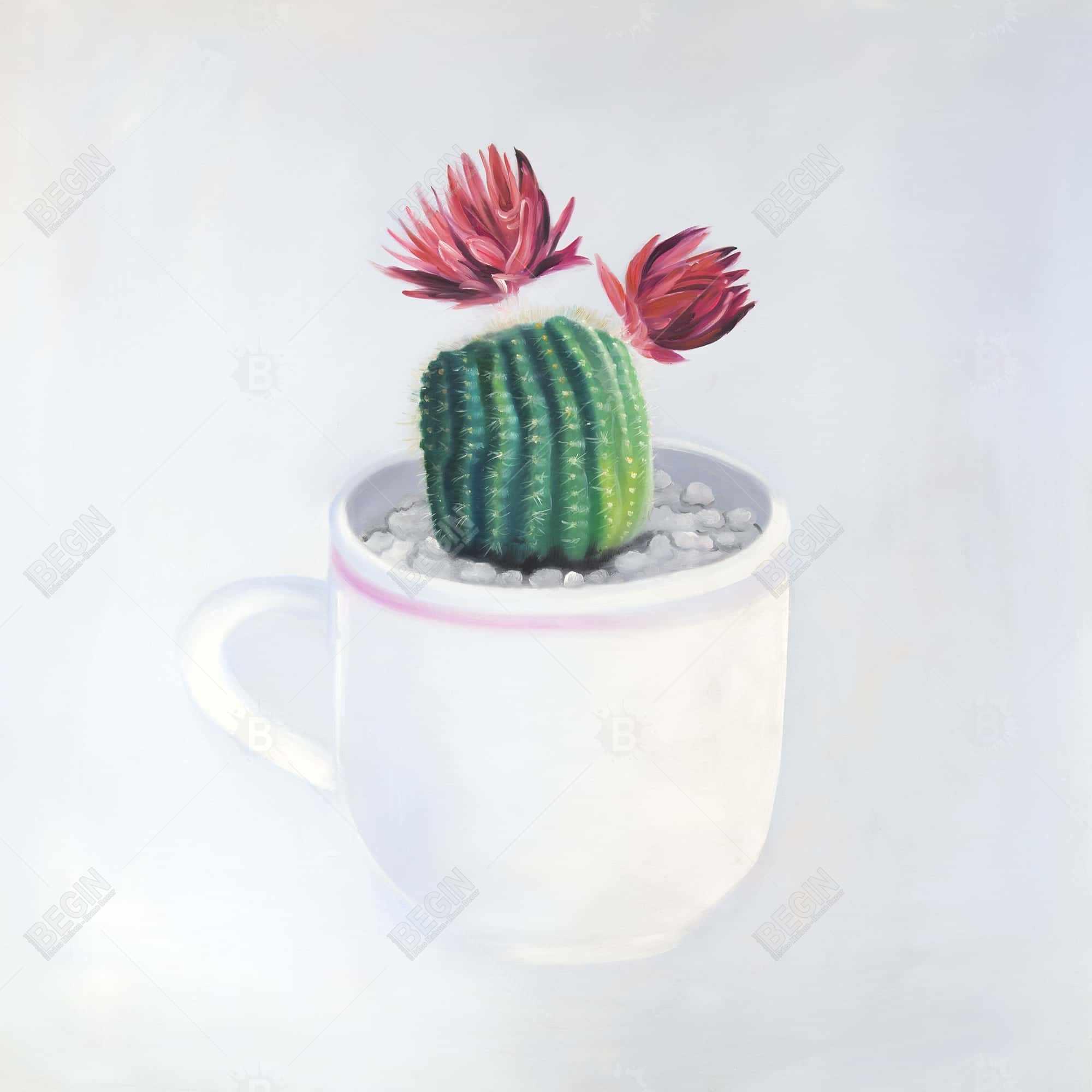 Mini cactus in a cup