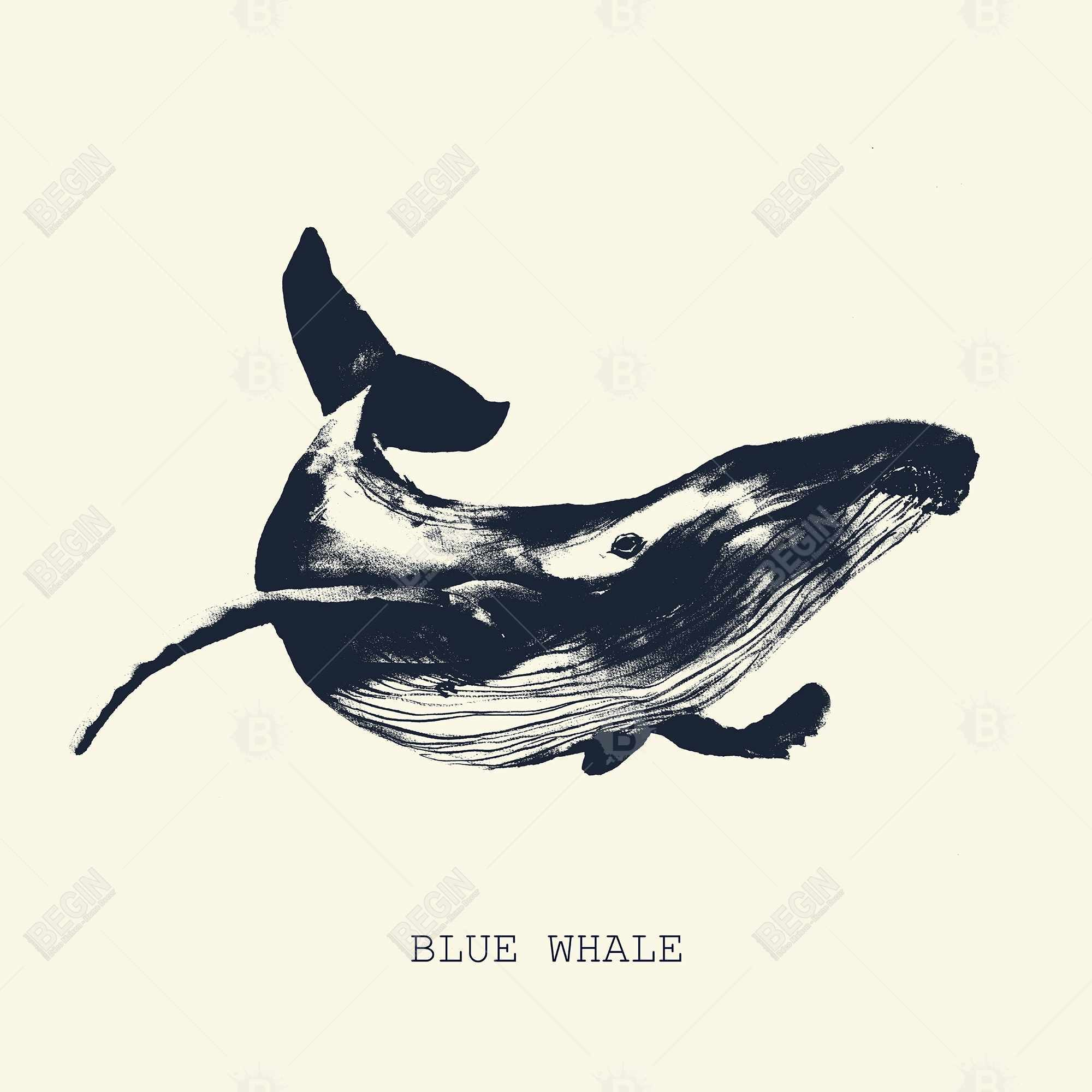 Blue whale sketch
