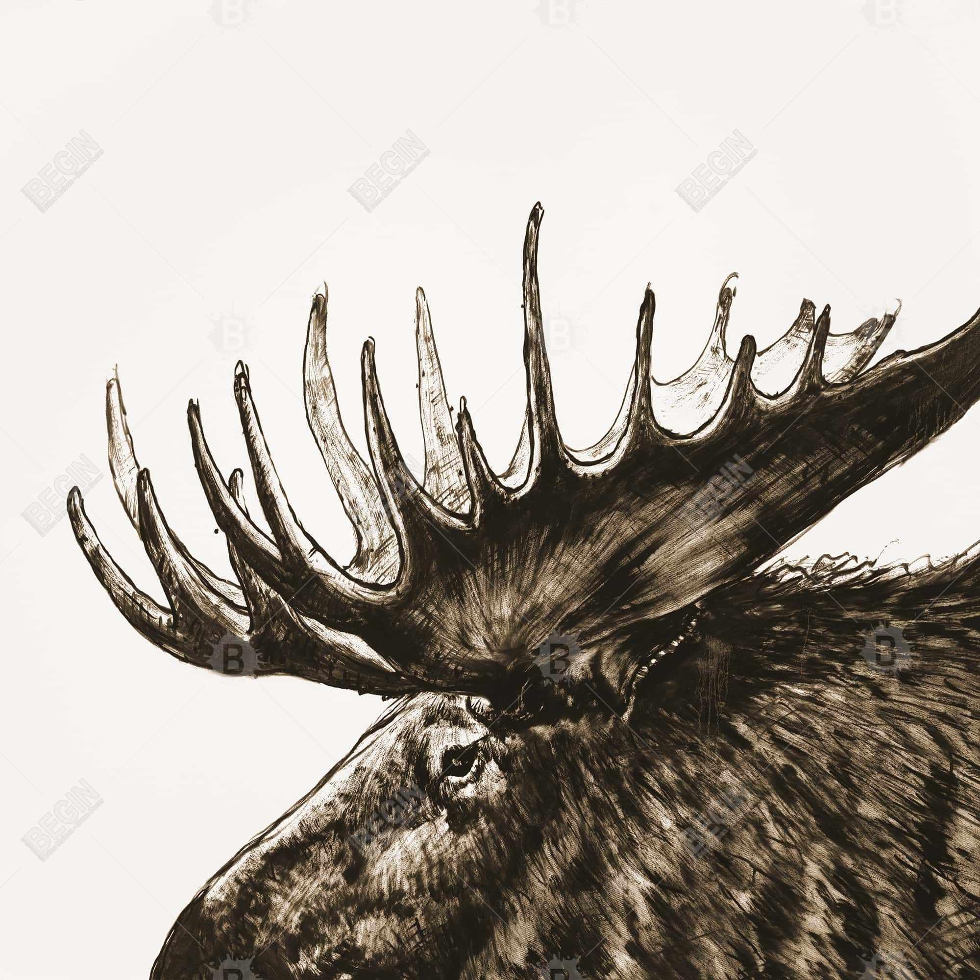 Moose plume sepia