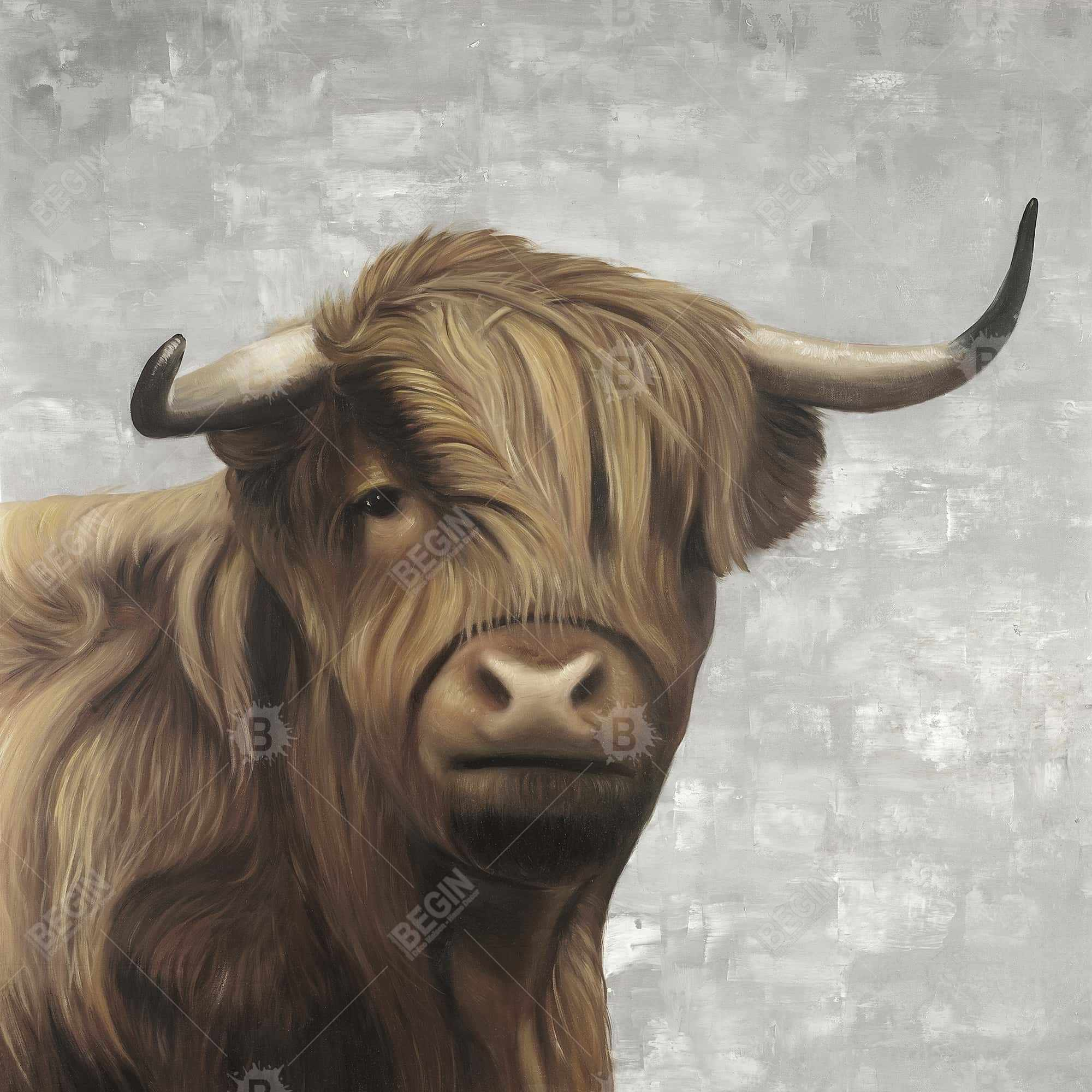 Desaturated highland cattle