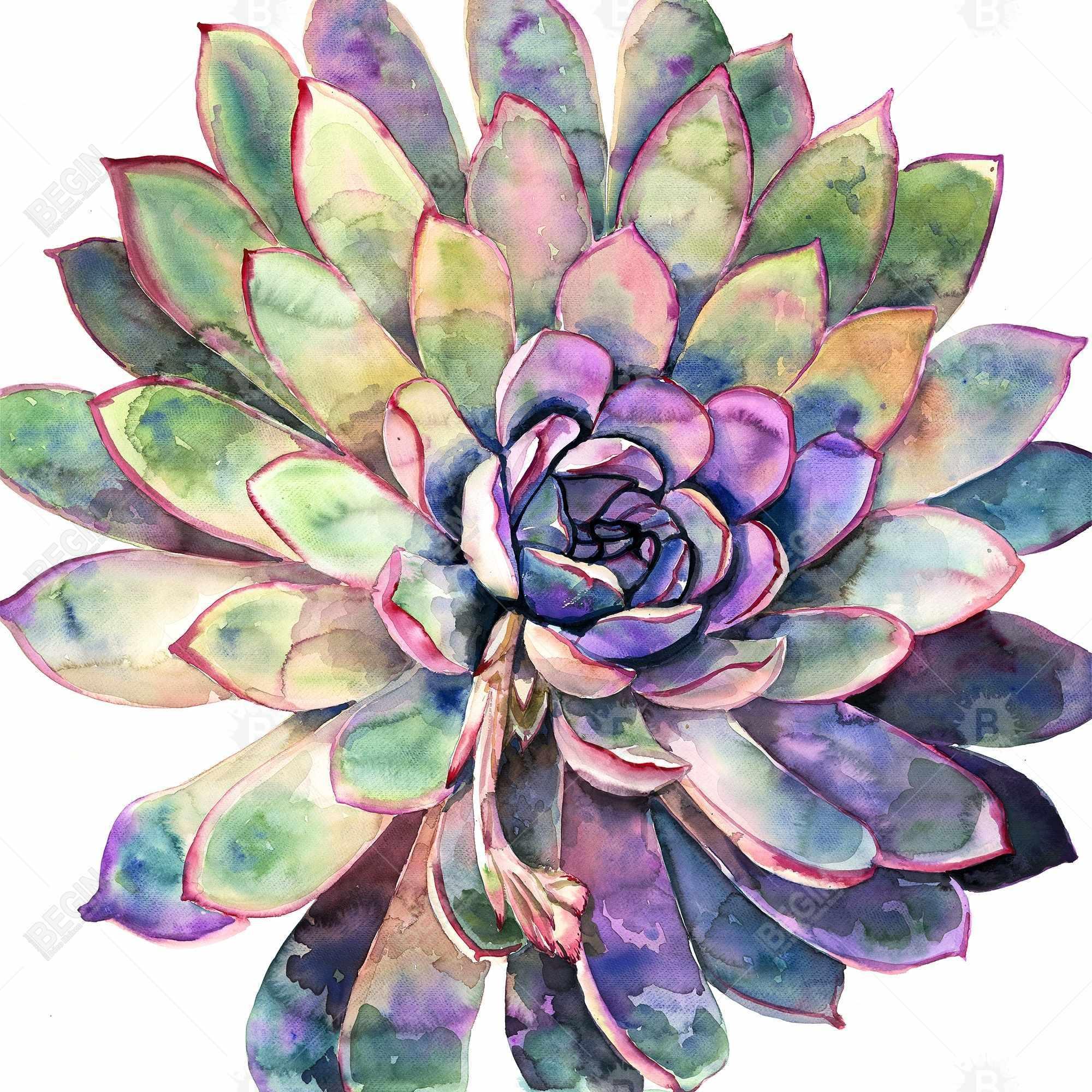 Multicolored succulent