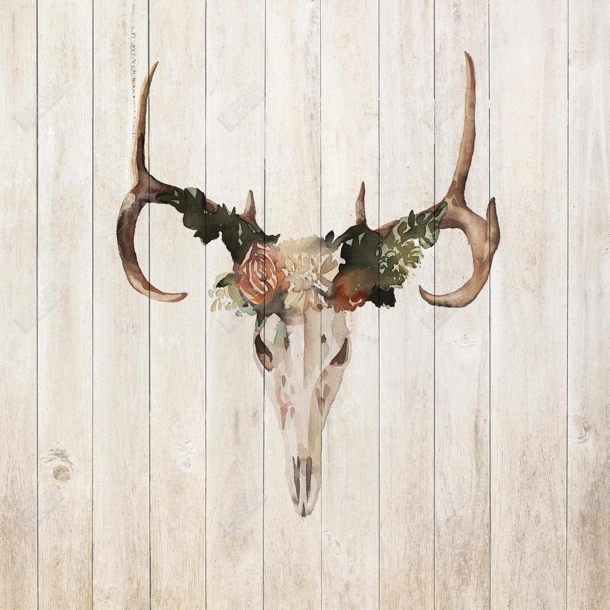 Mule deer skull with roses