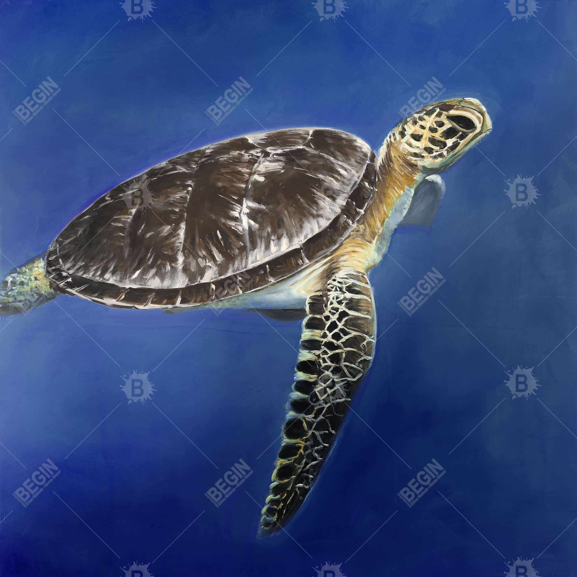 Turtle in the ocean