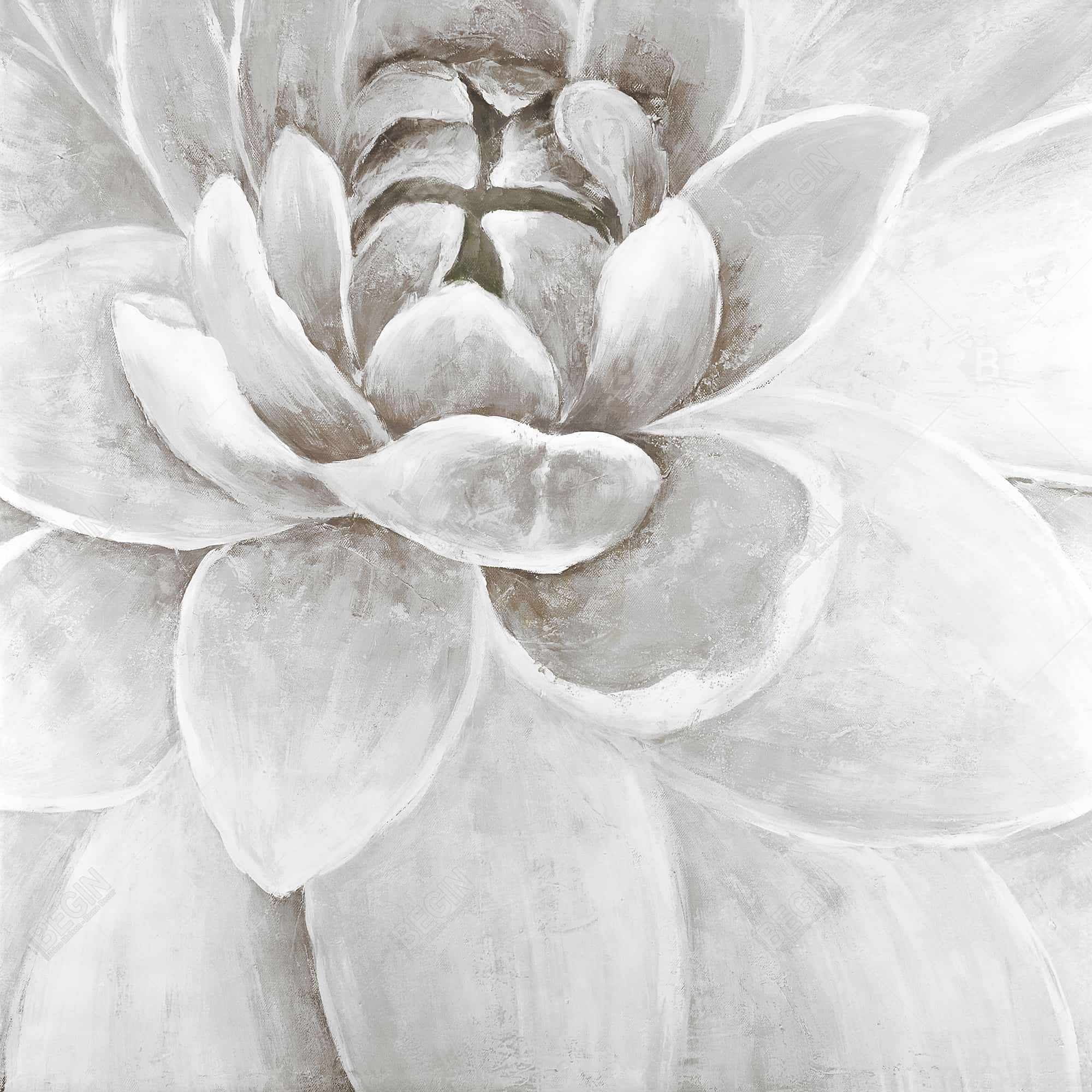 Delicate white chrysanthemum